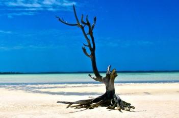Lone Tree Harbour Island Bahamas