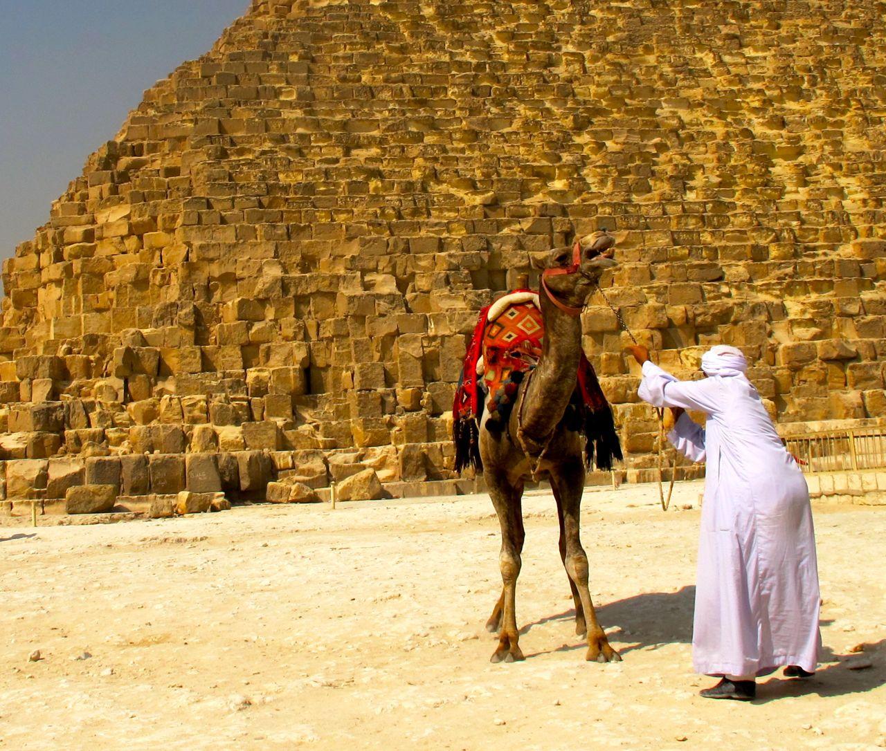 Camel Pyramid Egypt Giza