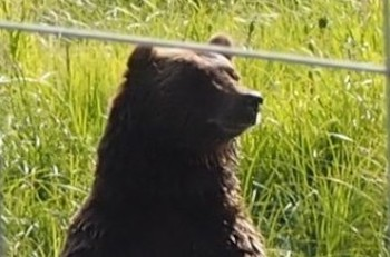 A bear at the Alaska Wildlife Refuge, just so you know what we were up against!